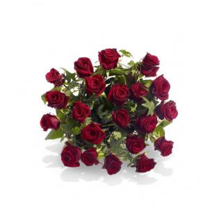 21 Róż Bordo