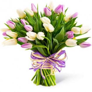 25 Tulipanów Kremowo Różowych